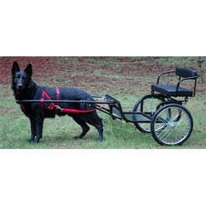 Dog or goat cart for Easy entry cart plans