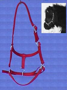 Adjustable Halter Miniature Horse