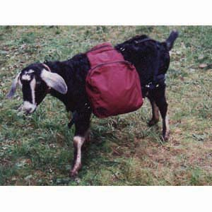 basic_goat_pack_1 goat harness goat harness at crackthecode.co
