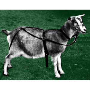 Ground Driving Rig Goat