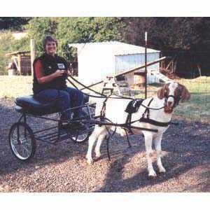 goat_harness_2 harness goat harness at crackthecode.co