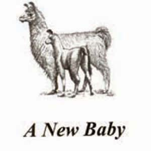 Birth Announcements| Llama  8 Pk