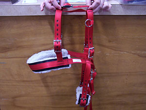 Reindeer Training Harness