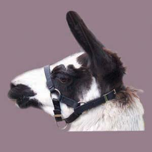 Gentle Touch Adjustable Llama Halter