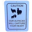 Sign Alpacas Capture Heart
