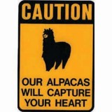 Sticker Capture Heart Alpaca 9 X 12
