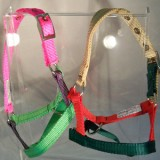 Clown Halter Alpaca
