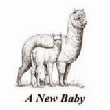 Birth Announcements Alpaca 8 Pk
