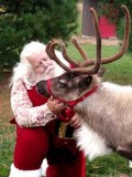 Adjustable  Halter Reindeer