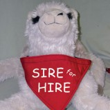 Sire For Hire Neckerchief